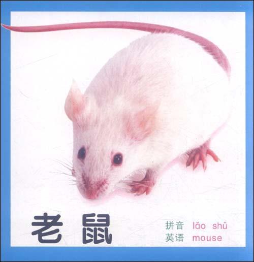 《幼儿启蒙卡片:动物2》 若凡【摘要 书评 试读】图书