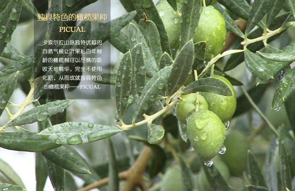 皮夸尔橄榄果
