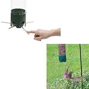 Squirrel-Proof Design & Placement