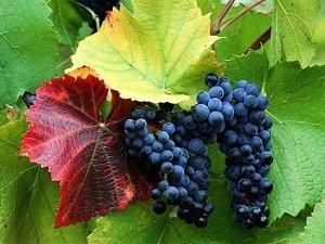 Kressmann 科瑞丝曼梅多克珍酿红葡萄酒750ml