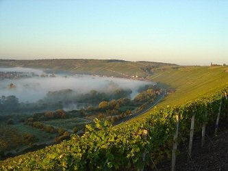 Weisser Burgunder Juventa 白皮诺优质白葡萄酒 750ml