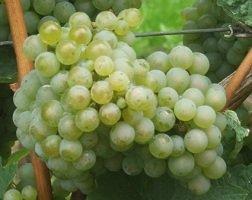 Silvaner Edition St. Valentin 华伦天奴系列席瓦娜优质白葡萄酒 750ml
