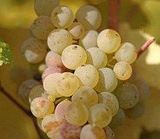Riesling Auslese Escherndorfer Lump 雷司令精选白葡萄酒 500ml
