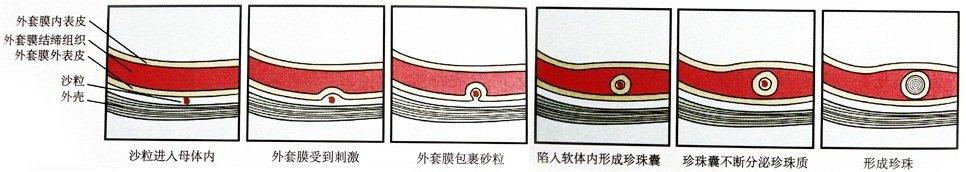温馨提示:由于珍珠是天然形成的,并非流水线批量生产,因此即使同规格
