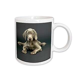 3dRose Weimaraner Puppy Mug, 15-Ounce