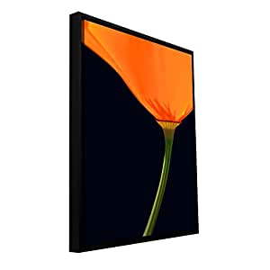 ArtWall 'Pauma Valley Poppy' Gallery Wrapped Canvas Art by Dean Uhlinger, 12.5 by 12.5-Inch