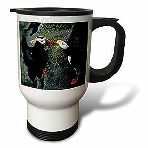 danita delimont–鸟–阿拉斯加, pribilof 群岛 海鹦小鸟,克利夫赛德–us02bja0099–jaynes 画廊–旅行马克杯 白色 14 oz