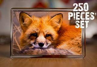 NSD5 空白透明亚克力冰箱照片插入磁铁 - 坚固透明塑料 DIY 冰箱磁贴套装,2.75x1.77 尺寸,婚礼礼品和纪念品(透明,250)