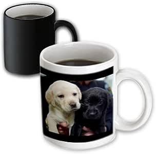 3dRose mug_1219_3 Black and Yellow Lab Puppies, Magic Transforming Mug, 11-Ounce