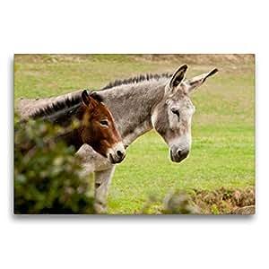 小骡子和大驴 75x50 cm