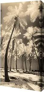 "PrintArt GW-POD-33-F244D-12x24""Palm Shadows I"" 由 Susan Friedman 创作画廊装裱艺术微喷油画艺术印刷品,30.48 cm x 60.96 cm"