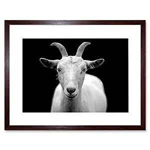 The Art Stop PHOTO ANIMAL GOAT HORN B&W CAPRICORN 框架印画 F12X2702 棕色 12-Inches x 16-Inches F12X2702_Dark Oak