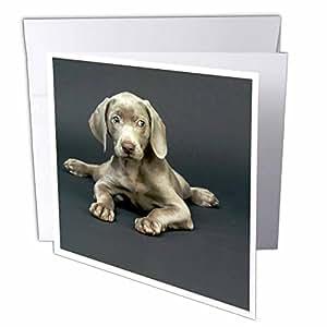 Dogs Weimaraner - Weimaraner Puppy - 贺卡 Individual Greeting Card