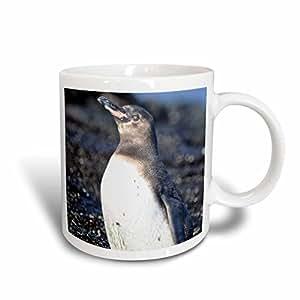 3drose kike CALVO 加拉帕戈斯–加拉帕戈斯企鹅, spheniscus mendiculus , punta moreno isabela 岛加拉帕戈斯–马克杯 白色 15盎司
