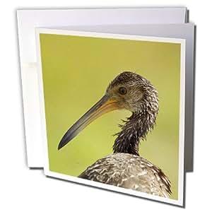 Danita Delimont - 鸟 - 林特金鸟,美国佛罗里达州Viera 湿地,美国 - US10 MPR0508 - Maresa Pryor - 贺卡 Individual Greeting Card
