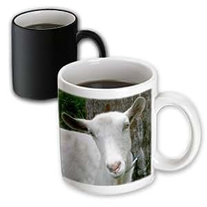 D 玫瑰苏珊动物园动物农场 goat–白色 saanen 乳制品 goat DOE 式 HEAD 照片–马克杯 黑色/白色 11 oz