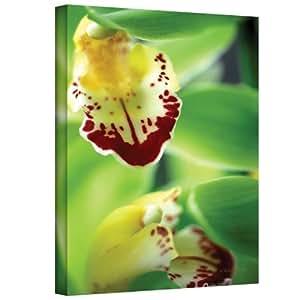 Art Wall Cymbidium Sea Foam Emerald Orchid Gallery Wrapped Canvas by Kathy Yates, 24 by 36-Inch