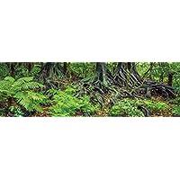 Carolina 定制笼爬行动物栖息地背景;雨林蕨类植物和根,适用于 91.44 cm 长 x 45.72 cm 宽 x 60.96 cm 高玻璃,三面包裹