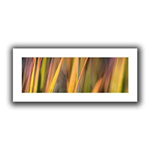 ArtWall Cora Niele 'Vivid Grass' Unwrapped Canvas Print, 12 by 28-Inch