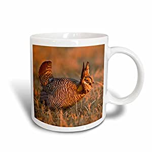 3dRose mug_144969_2 Prairie Chicken Bird Lek Loup County Nebraska USA US28 CHA0151 Chuck Haney Ceramic Mug, 15-Ounce, White
