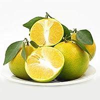 正宗广西皇帝柑新鲜包邮 贡柑黄帝柑 不打蜡水果 (5斤(1斤5-7个))