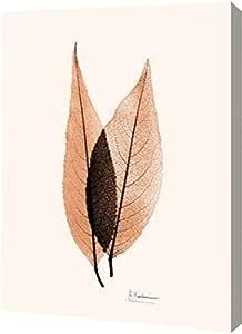 "PrintArt"" Caplulin Cherry Orange 艾伯特·科特西er 画廊装裱艺术微喷油画艺术印刷品,55.88cm x 76.20cm"