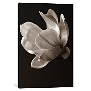 iCanvasART 14172-1PC6-26x18 Sepia Magnolia Canvas Print by Symposium Design, 1.5 x 18 x 26-Inch