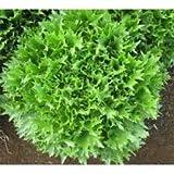 Spring Lettuce 多彩包 7474650672154
