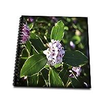 whiteoaks 摄影艺术作品–花–冬季 Daphne 是美丽小粉色花朵 That 弹簧 Bloom–绘本