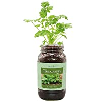 环保草本礼品套装,梅森罐装草本花园入门套件,包括一个梅森罐,3 个可可椰子种植饼干和经认证的*非转*种子(Cilantro)