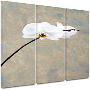 ArtWall 3-Piece Elena Ray 'Orchid Blossom' Gallery-Wrapped Canvas Artwork 24X36