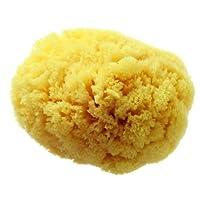 Hydrea London Grass Sea Sponge for Bath 5 to 5.5-inch