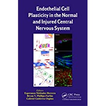 Endothelial Cell Plasticity in the Normal and Injured Central Nervous System (English Edition)