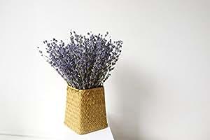 Lmdec 天然干花花束花瓶 300支薰衣草干花搭花篮套装花客厅装饰花
