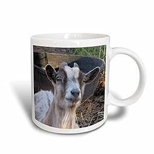 mug_21058_2 Jackie Popp Nature N Wildlife animals - Grey and white goat - Mugs - 15oz Mug