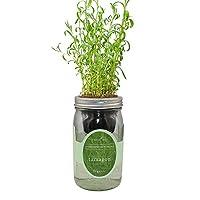 环境水培草本生长套件,自动浇水梅森罐草本花园入门套件,室内种植您自己的草本(Tarragon)