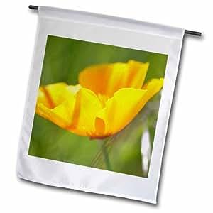 3dRose 加州罂粟橙色花朵春季摄影花园旗,30.48 x 45.72 厘米