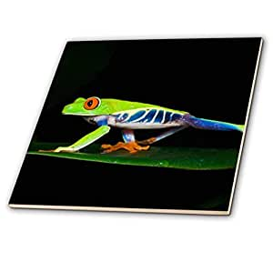 3dRose ct_87226_3 Costa Rica, Red-Eyed Tree Frog Sa22 Ksc0173 Kevin Schafer Ceramic Tile, 8""