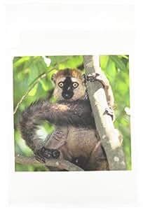 danita delimont–lemurs–棕色 red-fronted lemur , primate , madagascar-af24ksc0090–Kevin schafer–旗帜 12 x 18 inch Garden Flag