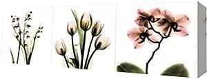 "PrintArt GW-POD-23-AK-PL-007-20x7""粉色花卉 Tryp Tych II"" Albert Koetsier 画廊装裱艺术微喷油画艺术印刷品 16"" x 5"" GW-POD-23-AK-PL-007-16x5"