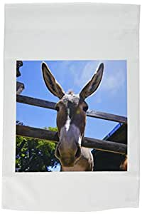 kike CALVO 动物–驴 IN A 农场2–旗帜 12 x 18 inch Garden Flag