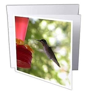 3dRoseHummingbirdFlyingtoFeeder-问候卡,15.24x15.24 厘米,6 件套(gc_29594_1)