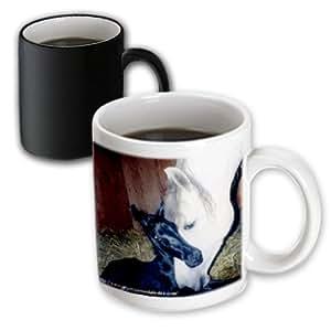mug_1263_3 Horse - Andalusian Mare and Foal - Mugs - 11oz Magic Transforming Mug