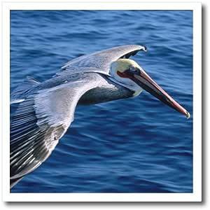 danita delimont–鸟–PELICAN 鸟–na01dpb0022–Douglas peebles–熨烫热转印