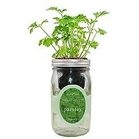 环保水培草本生长套件,自动浇水梅森罐草本花园入门套件室内,从种子中种植您自己的草本(巴黎)