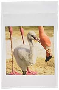 danita delimont–热带鸟–加勒比火烈鸟,热带鸟,加利福尼亚–US05mpr0055–maresa pryor–旗帜 12 x 18 inch Garden Flag