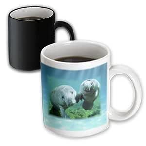 3dRose mug_39647_3 2 Manatees Looking At You Magic Transforming Mug, 11-Ounce
