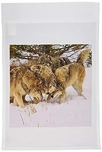 vwpics 狼–灰色狼 canis lupus Alpha MALE 和阿尔法母带 Beta MALE interacting–旗帜 12 x 18 inch Garden Flag