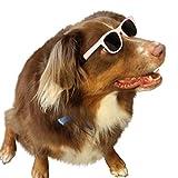 G013 宠物狗复古 80 年代太阳镜带护目镜,适合中型品种,20-60 磅