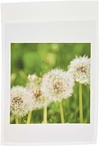 patricia sanders Flowers–许愿花–dandelions–花卉摄影–旗帜 12 x 18 inch Garden Flag